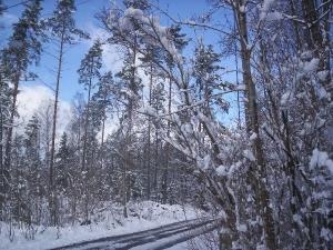 Spring in Sweden